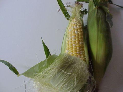 corn4F