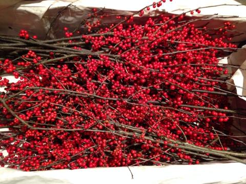 winterberry1