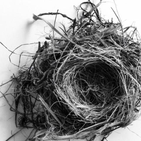 nest-650x650_kirstenJ