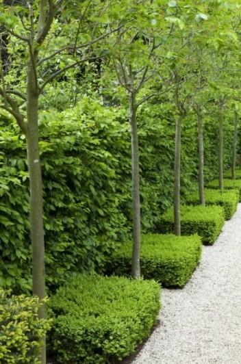 st-johns-wood-entrance-trees-del-buono-gazerwitz-gardenista%20copy_crpt