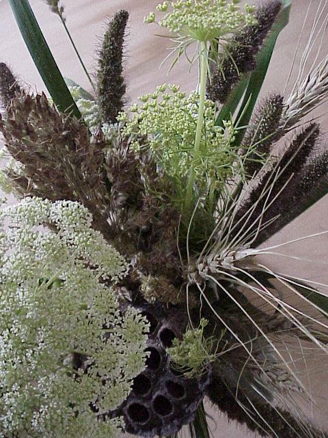 weeds4F