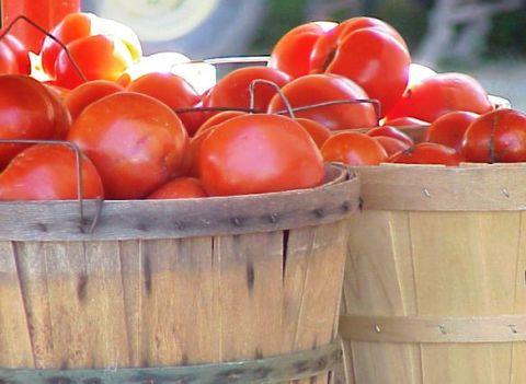 tomatobshl2f
